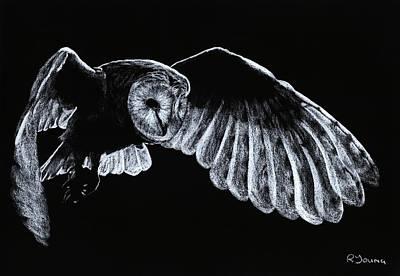Barn Owl Print by Richard Young