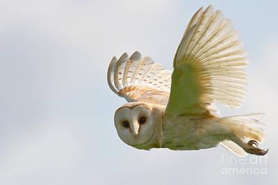 Barn Owl Print by Ruth Hallam
