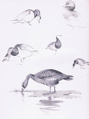 Geese Drawing - Barnacle And White Fronted Geese by Archibald Thorburn