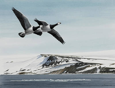 Snow Geese Painting - Barnacle Geese by Dag Peterson