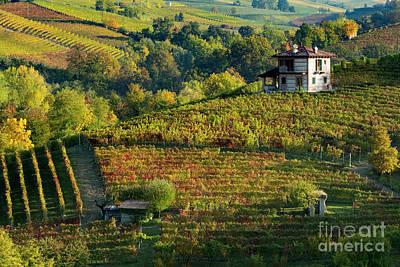 Fall Wine Grapes Photograph - Barolo Vineyard by Brian Jannsen