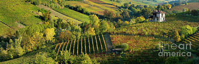 Fall Wine Grapes Photograph - Barolo Vineyards by Brian Jannsen