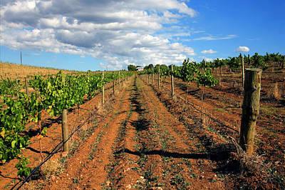 Barossa Vineyard Original by Mike  Dawson