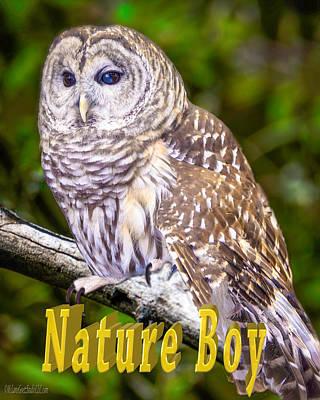 Barred Owl Nature Boy Print by LeeAnn McLaneGoetz McLaneGoetzStudioLLCcom