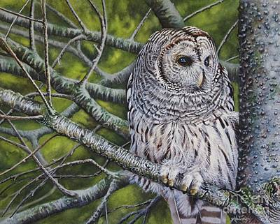 Tree With Eye Painting - Barred Owl by Greg and Linda Halom