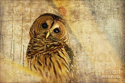 Textures Photograph - Barred Owl by Lois Bryan