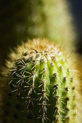 Barrel Cactus Print by Ray Laskowitz - Printscapes