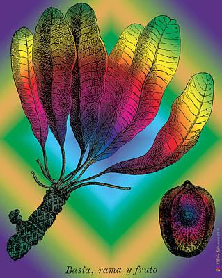 Basia Plant Print by Eric Edelman