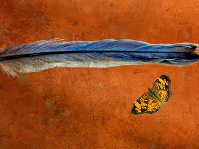 Checkerspot Photograph - Basic Elements Of Flight Bluebird Gift 3 by Kathy Barney