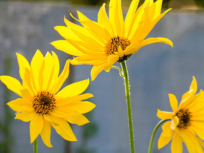 Floral Photograph - Basking In Sunlight by Garvin Hunter