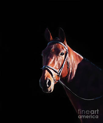 Pet Portrait Digital Art - Bay On Black - Horse Art By Michelle Wrighton by Michelle Wrighton