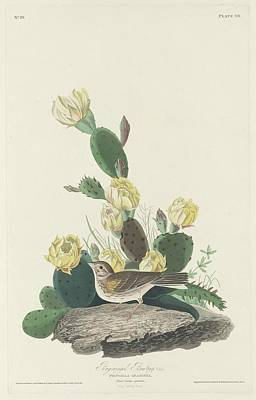 Bay-winged Bunting Print by John James Audubon