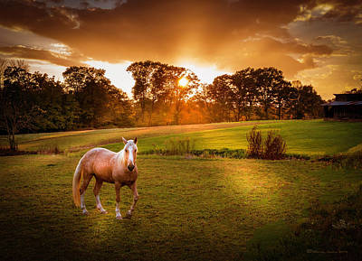 Gold Horse Photograph - Be My Friend by Marvin Spates