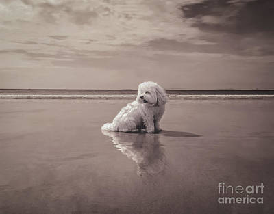 Clouds Photograph - Beach Bum by Charlie Cliques