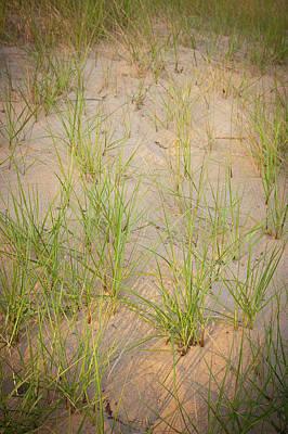 Indiana Photograph - Beach Grasses Number 10 by Steve Gadomski