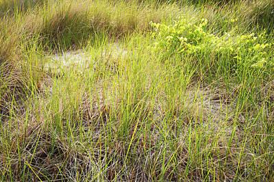 Indiana Photograph - Beach Grasses Number 8 by Steve Gadomski
