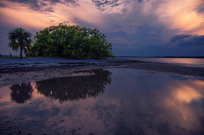 Orange Photograph - Beach Trees by Michael Frizzell