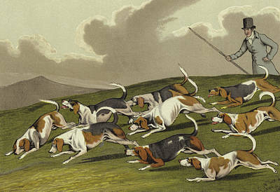 Fox Drawing - Beagles by Henry Thomas Alken