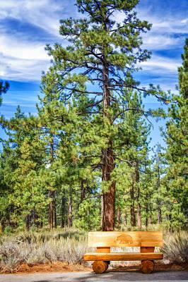 Pine Photograph - Bear Bench Taylor Creek by LeeAnn McLaneGoetz McLaneGoetzStudioLLCcom