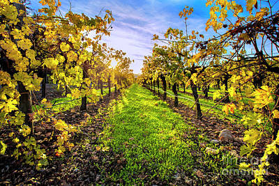 Fall Wine Grapes Photograph - Beautiful Colors On The Vines by Jon Neidert