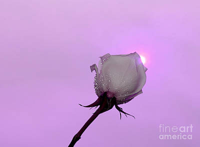 White Flower Photograph - Beautiful Destiny by Krissy Katsimbras