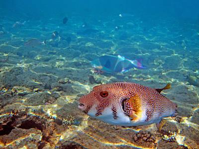 Beautiful Fish. Underwater World.  Original by Andy Za