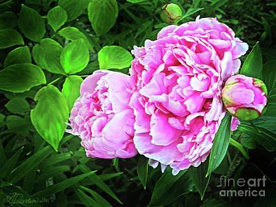 Beautiful Garden Peony Print by Patricia L Davidson