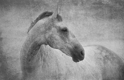 Pet Photograph - Beautiful Grey Horse In Textured Black And White by Michelle Wrighton