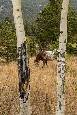 Beautiful Horse Through The Aspen Trees Portrait Print by James BO  Insogna