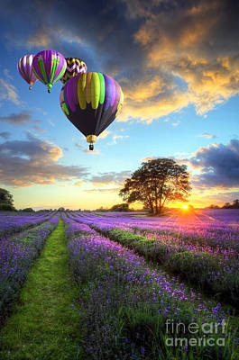 Beautiful Image Of Stunning Sunset With Atmospheric Clouds And Sky Over Vibrant Ripe Lavender Fields Print by Caio Caldas
