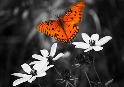 Butterfly In Flight Photograph - Beautiful Oranges by Parker Cunningham
