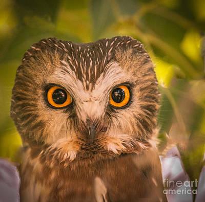 Beautiful Owl Eyes Print by Robert Bales
