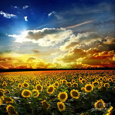 Beautiful Sunset Over A Field With Podsolnuzami Print by Unknow