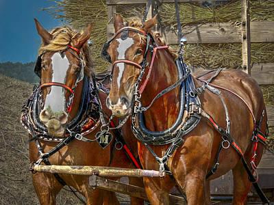 Feed Mill Photograph - Beautiful Team by F Leblanc