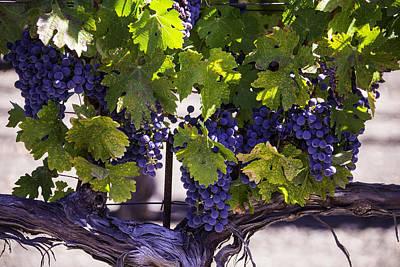 Beautiful Vineyards Print by Garry Gay