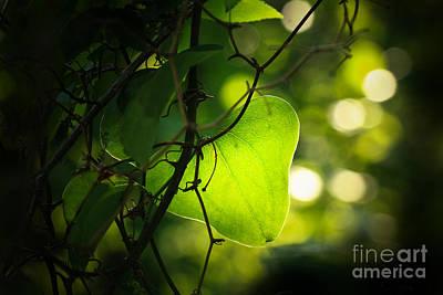 Beauty In Green Print by Kim Henderson