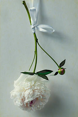 White Flower Photograph - Beauty In Suspension by Maggie Terlecki