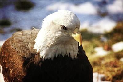 Yellow Beak Photograph - Beauty Of America by Karol Livote