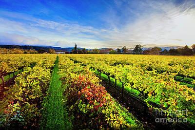 Beauty Over The Vineyard Print by Jon Neidert