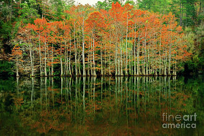 Beaver's Bend Cypress All In A Row Print by Tamyra Ayles