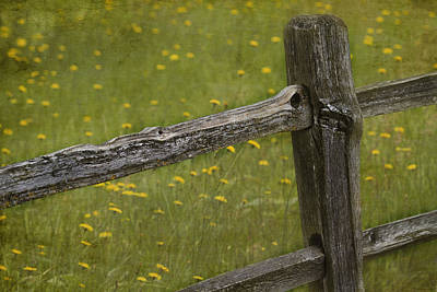 Fence Posts Photograph - Beckoning by Rebecca Cozart
