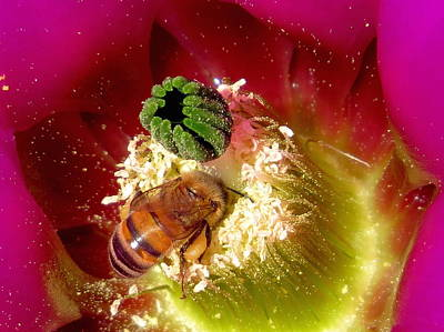 Photograph - Bee At Work by Feva  Fotos