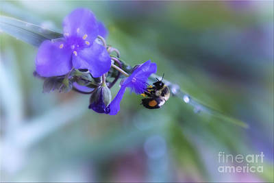 Rights Manages Images Photograph - Bee Harmony by Mary Lou Chmura