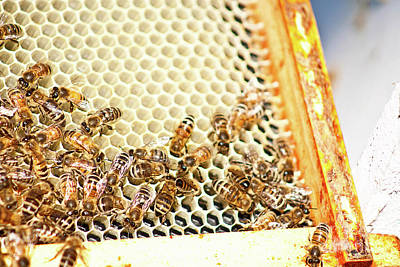Photograph - Bee Hive 3 by Janie Johnson