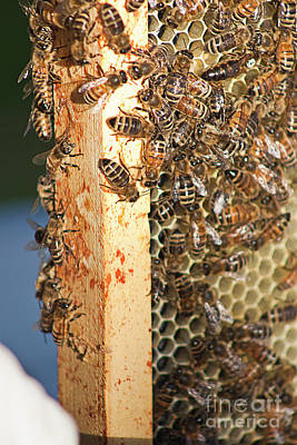 Photograph - Bee Hive 4 by Janie Johnson