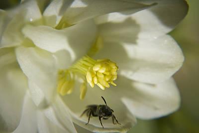 Bee Mine Print by Teresa Mucha