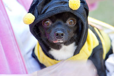Little Dogs Photograph - Bee Mine by Toni Hopper