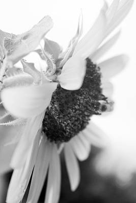 Black_white Photograph - Bee by Ruthann Carlson