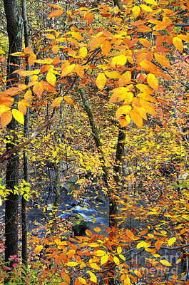 Thomas R. Fletcher Photograph - Beech Leaves Birch River by Thomas R Fletcher