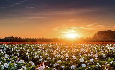 Begonias Photograph - Begonia Farm by Wim Lanclus